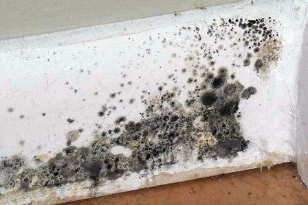 промерзание стен дома и образование грибка устранение